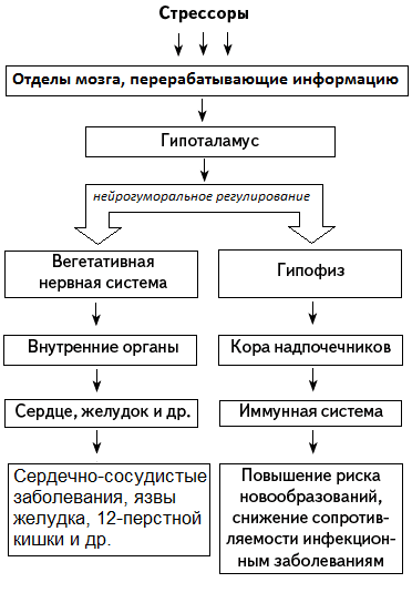 Упрощённая схема развития
